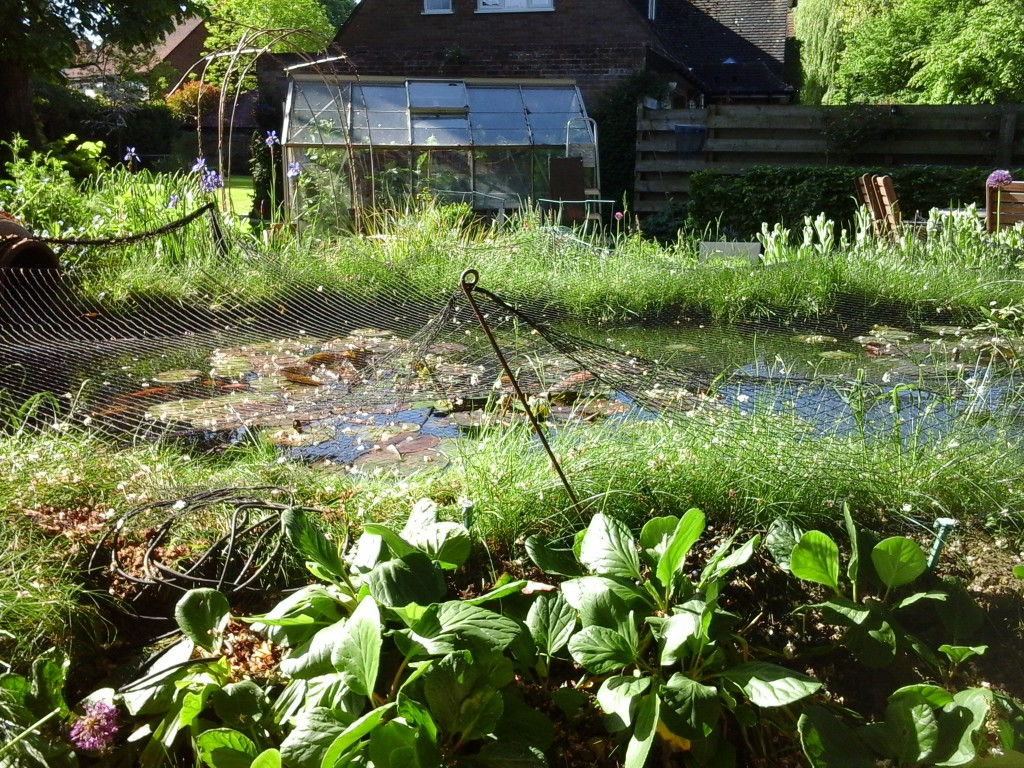 Effect of hot weather on your pond