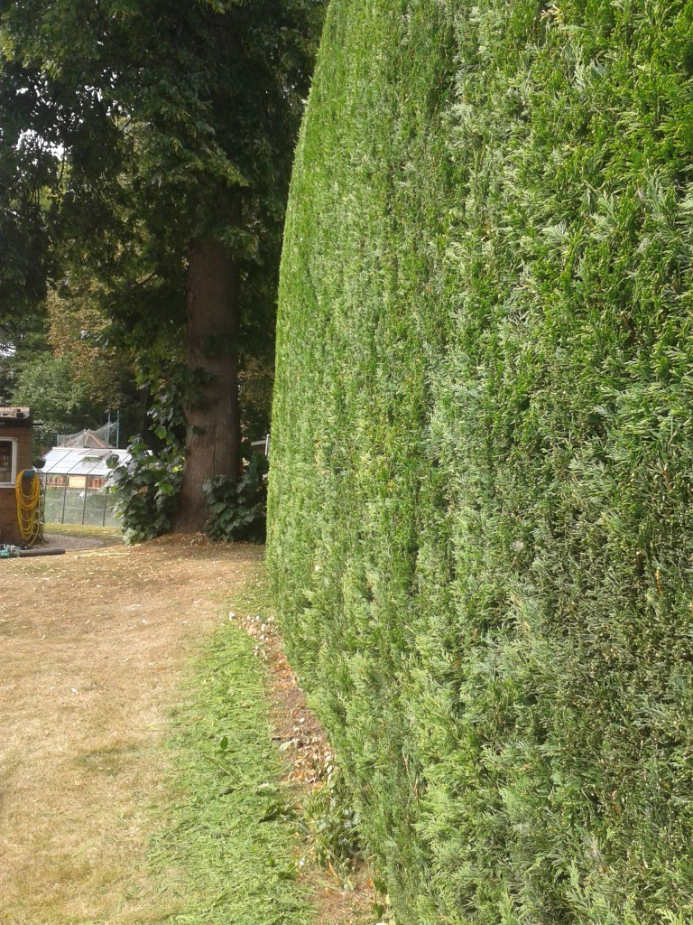 Cutting high hedges