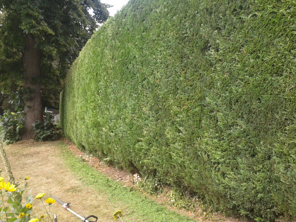 Landscape Gardening Per Hour : Of hedge took me a about hours to cut time clear up
