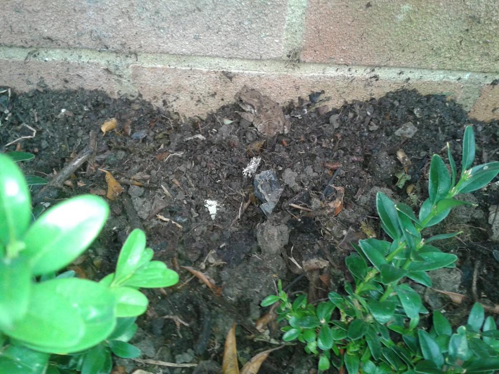 Revitalise a flower bed