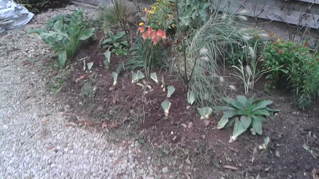 Replanting a flower bed