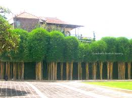 Stop bamboo spreading