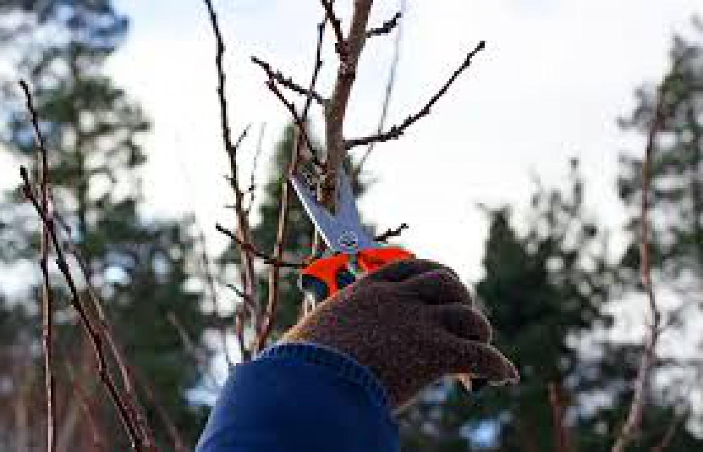 Simple rose pruning rules