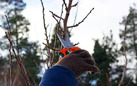 Simple rose pruning rules