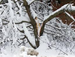 prevent snow damage in your garden