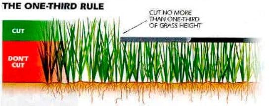 Lawn mowing best practice